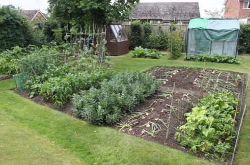 Vegetable David Rollinson