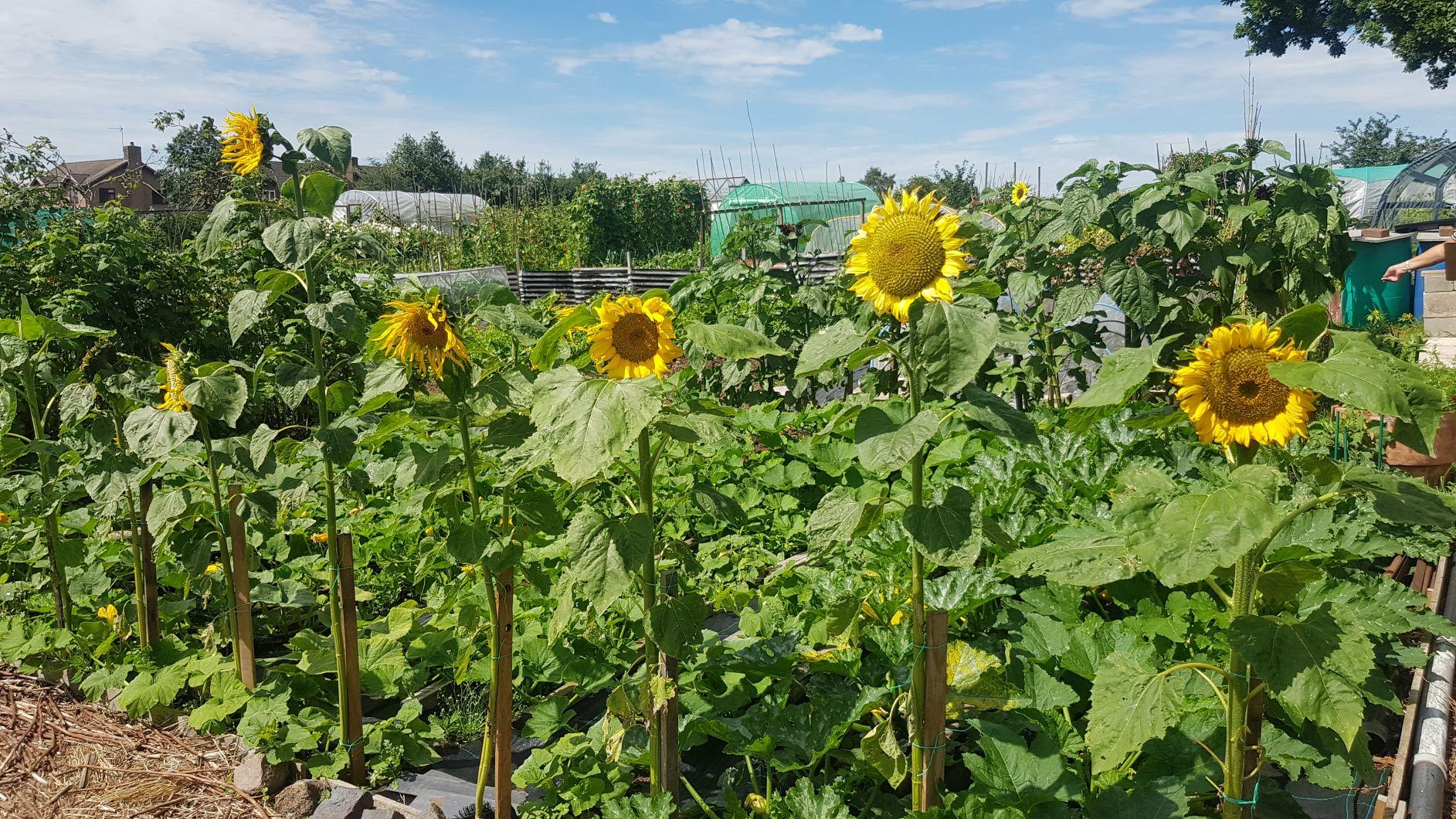 In Bloom Garden 7 1